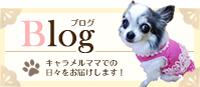 ブログはこちら